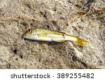 close up of fresh fish over... | Shutterstock . vector #389255482