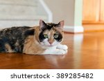 calico cat with green eyes on... | Shutterstock . vector #389285482