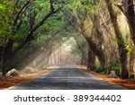 Stock photo abstract background of route and journey amidst the big tree and beautiful nature 389344402