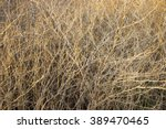 Long Dry Grass As Background