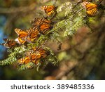 monarch butterfly migration in... | Shutterstock . vector #389485336