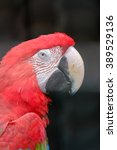 scarlet macaw macaw close up... | Shutterstock . vector #389529136