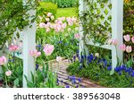 Pink Tulips And Grape Hyacinth...