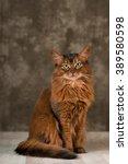 somali cat portrait at studio... | Shutterstock . vector #389580598