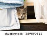 Scottish Cat Hides