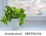 Basil Plants In A Pot Near The...