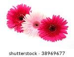 fine flowers | Shutterstock . vector #38969677
