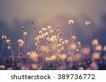 vintage soft light tone and... | Shutterstock . vector #389736772