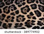 jaguar fur texture background... | Shutterstock . vector #389774902