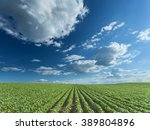 rows of green soybeans against... | Shutterstock . vector #389804896