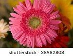 Beautiful pink herbera bouquet - stock photo