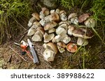 Small photo of Penny bun (porcini) mushroom and victorinox pocket knife