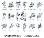 herbs and spices set. hand... | Shutterstock .eps vector #390090658