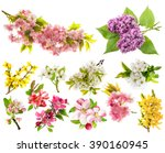 Stock photo blossoms of apple tree cherry twig pear forsythia lilac set of spring flowers isolated on 390160945