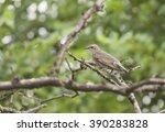 common starling | Shutterstock . vector #390283828