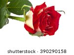 rose in drops of water isolated ... | Shutterstock . vector #390290158