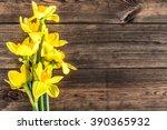 Beautiful Daffodils Flowers On...