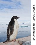 Small photo of Adelie penguin standing on the rock, icebergs and mountains in the background, Antarctic Peninsula