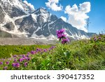 Mountain Flowers In A Meadow O...
