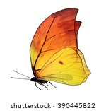 Stock photo butterfly isolated on white background 390445822