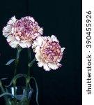 carnation flower  black... | Shutterstock . vector #390455926