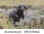 buffalo attacking. | Shutterstock . vector #390478462