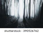 bright light in misty forest   Shutterstock . vector #390526762