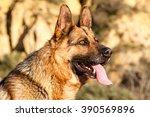 German Shepherd Dog Head.