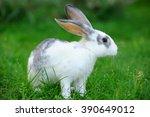 little rabbit on green grass in ... | Shutterstock . vector #390649012
