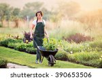 Gardener With Seedling In...