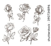 vintage rose. hand drawn vector ... | Shutterstock .eps vector #390734896
