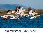 flock of american great white...   Shutterstock . vector #39073531