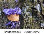 Jacaranda Tree Trunk With Small ...