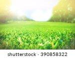 Close Up Green Grass Field Wit...