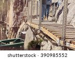 wooden walkway in a hiking route | Shutterstock . vector #390985552