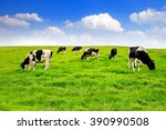 cows on a green field and blue... | Shutterstock . vector #390990508