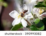 bee on a flower of the white... | Shutterstock . vector #390993082