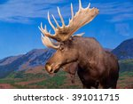 male moose against backdrop of... | Shutterstock . vector #391011715
