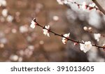 apricot flowers on a tree in... | Shutterstock . vector #391013605