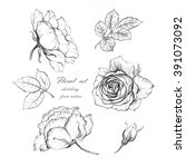 a sketch from nature flowers... | Shutterstock . vector #391073092