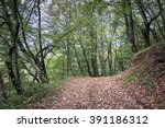 autumn forest. forest trail in... | Shutterstock . vector #391186312
