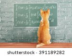 funny education idea with red... | Shutterstock . vector #391189282