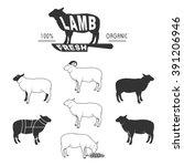 vector sheep icon set  sheep... | Shutterstock .eps vector #391206946