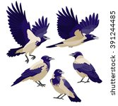 crows on white background  ... | Shutterstock .eps vector #391244485