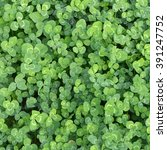 Background. Green Leaves Of A...