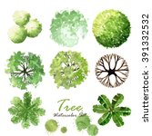 top view tree watercolor plan... | Shutterstock . vector #391332532