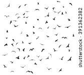 birds  gulls  black silhouette... | Shutterstock . vector #391362382