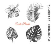 vector exotic hand drawn palm... | Shutterstock .eps vector #391380442