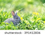 Stock photo grey rabbit in grass closeup 391412836