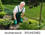 Smiling Male Gardener Is...